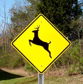 "Pictured: A 24""x24"" Reflective Deer Crossing Sign (Post sold separately)."
